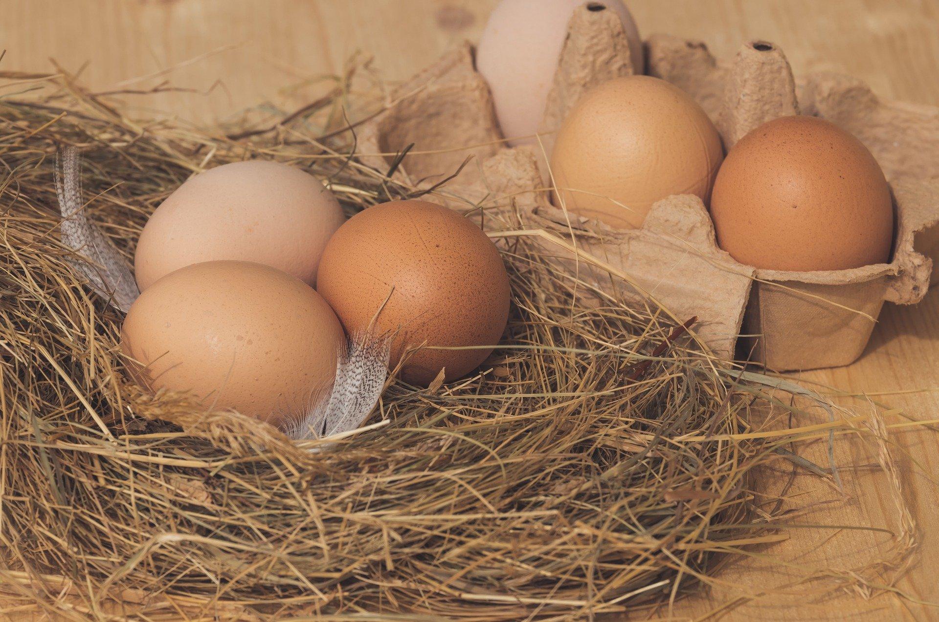 witaminy jaja